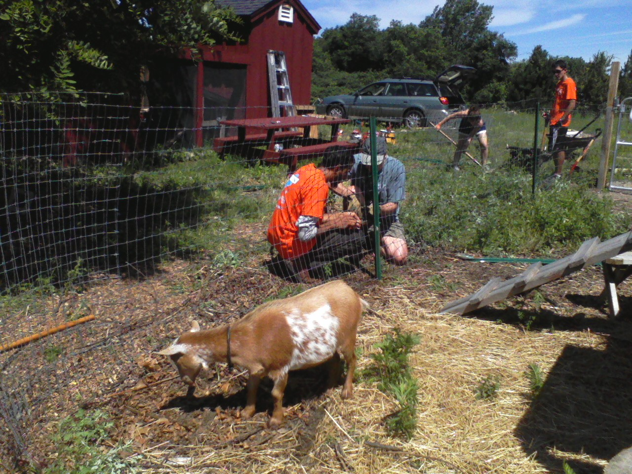 Climate Summer interns working at goat yard
